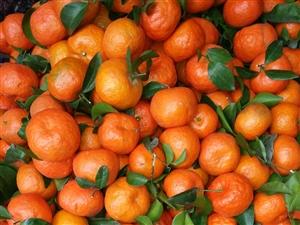 年货要水果的朋友们找我哟。首杨水果全国连锁茅台皇家大院店。百万鲜果大放购。批发兼零售。