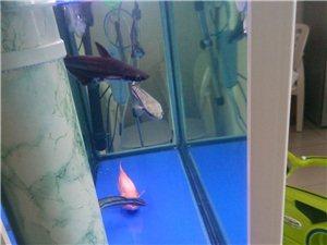 觀賞魚,熱帶魚