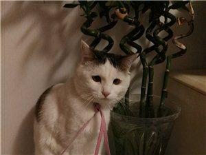 赠送绝育猫猫