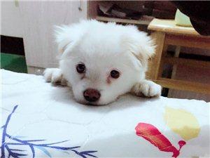 单身狗寻找一个温暖的家