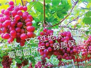 新疆葡萄批发