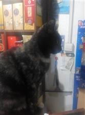 农坛小区寻猫谢谢