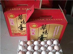 柴雞蛋健康品