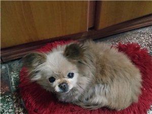 陪伴12年的狗狗丟失