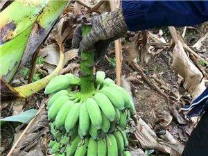 新鲜生熟树瓜