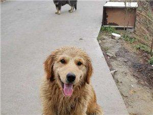 柿花坪背水处发现遗失宠物狗