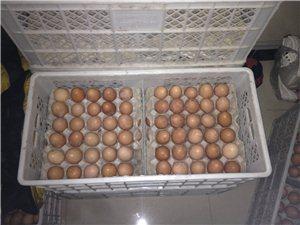 批發零售雞蛋
