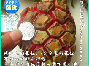 """""""酒饭团""""算是我们寻乌丹溪岑峰的特产吗?"""