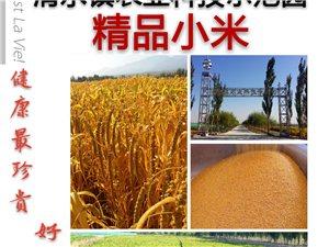 本地自产优质小米