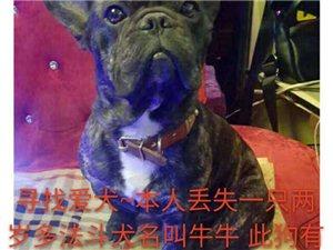 此狗正在用药,有很多东西不能吃,请你看到与我联系