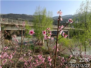 �春三月踏青季,赤水河畔桃花�_