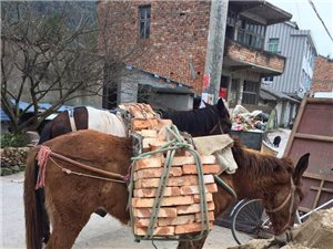 馬運用于交費不便的各個場所