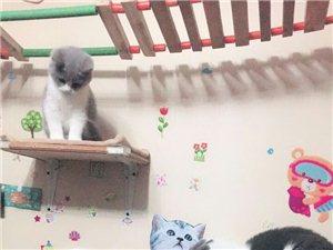 兰溪本地宠物猫寄养