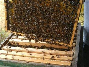 廣西自產蜂蜜