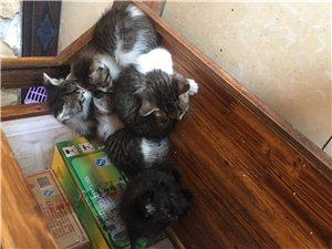自养猫猫,生了小幼崽