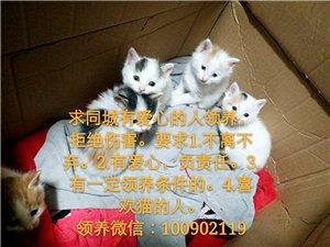 天津市大港区小奶猫领养