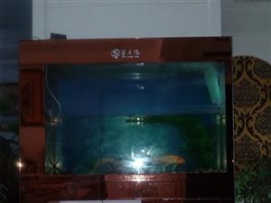 鱼缸低价出售