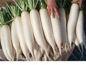 大量批發白蘿卜