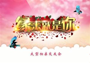 2017端午节公益相亲大会