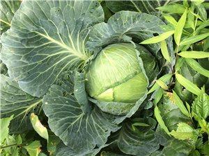 无公害蔬菜出售
