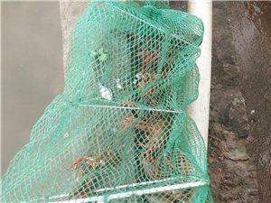 有没有龙虾馆要来龙虾节上推广自己口味龙虾的