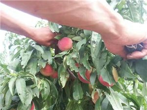 清凉一夏,水果来袭!