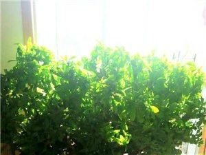 自家花草绿植