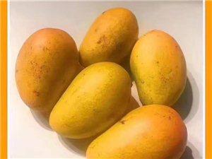 来吧来吧来吧,你吃芒果我来送