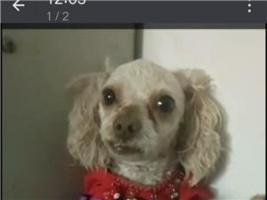 狗狗今天中午在龙泉山公园丢失望广大朋友帮忙转发留意一下看到请联系13461086088
