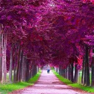 路是自己选的,因为你没有退路。