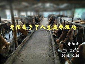 开阳县乡下人生态养殖