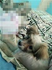 有没有人想养狗我在洪川小区附近捡了一只小狗因本人已养有两条狗无法再养一只