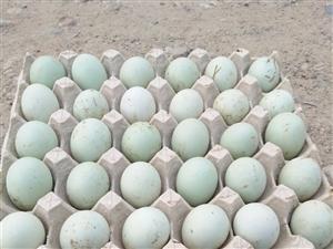 出售批发鸭蛋