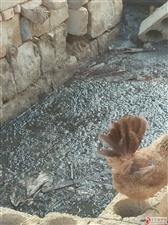 环保,养猪猪污染谁来管