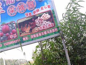 十月一到了�Ш⒆痈惺芤幌锣l村�L景。丙�A采摘�@�g迎你!�天然�o公害�o�r�免洗水果!��13001716
