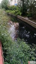 如东中天润园景观河变成如今的臭水沟!