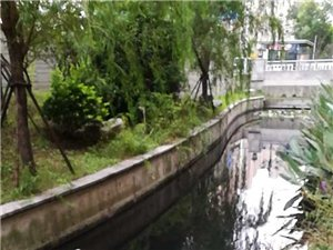 澳门太阳城平台中天润园景观河变成如今的臭水沟!