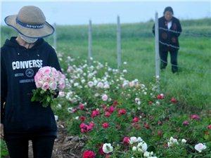 (小顽童)自己苗圃开的花,国外品种