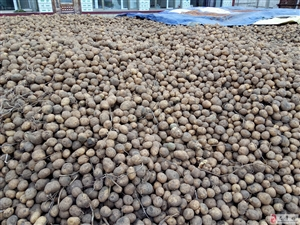 出售当地土豆