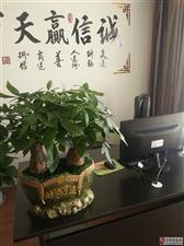 鼎泰丰智能家居诚招金沙平台县域代理,招商电话13879780290