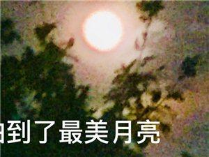 【��男秀�觥侩��g林