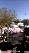 瓜州棉花开称收购,棉农排队卖棉