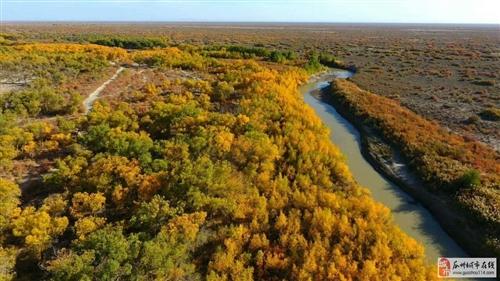 瓜州望杆子的胡杨林美极了,秋意浓浓