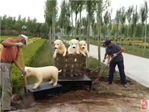 河北邢台不锈钢雕塑