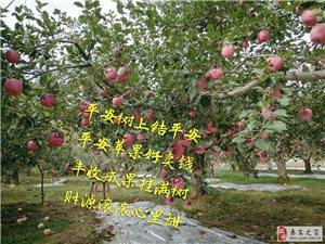秦安苹果印平安