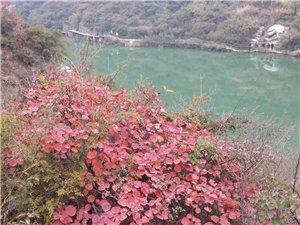 长寿山赏红叶