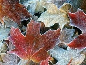 秋天说来就来,说走又要走了。来得美好,走的从容。