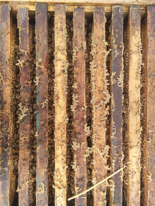 卖蜂蜜   蜂王浆蜂花粉  蜂胶蜂蜡  ...