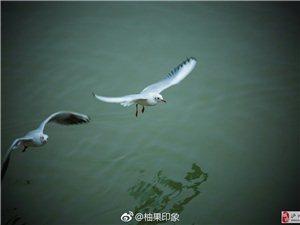 你好!海鸥,你好!泸州。
