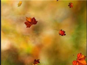 漫长一个秋幽幽一片叶